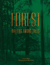 Forest cover_for web use.jpg