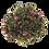 Thumbnail: Thé vert parfumé  - ACAI & GOJI - Teatower