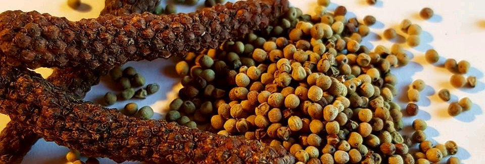 Perles de Poivre Long Kampot - BIO - 50Gr