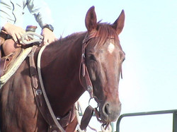 Cutter after his first time being roped off of.