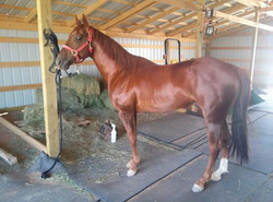Facebook - Our stud, Bb Smart Cutter gettin ready for a ride,