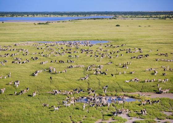 Zèbres au Makgadikgadi