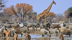 Wildlife Namibia