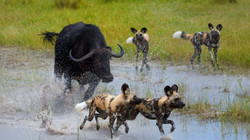 Okavango Delta 2