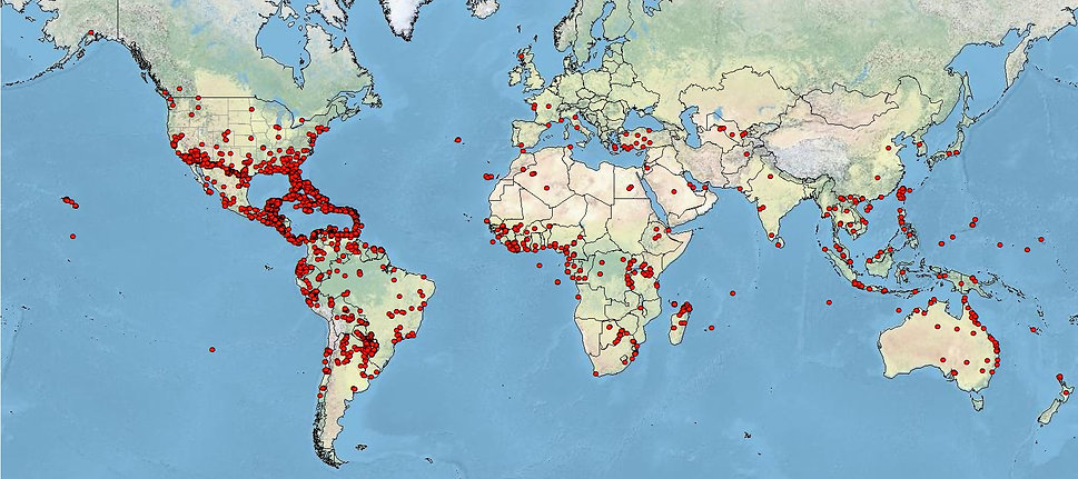 UF Termite localities.JPG