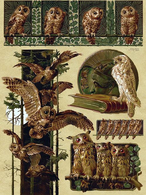 """Owlery"" by Anton Seder, 1896"