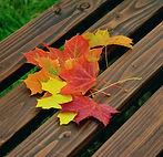 herfstbladeren_verzamelen.jpg