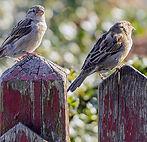 vogels_aanrennen1.jpg