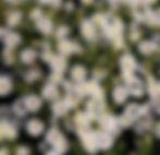 insecten_zoeken1.jpg