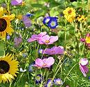 wilde bloemen.jpg