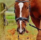 pony_voeren.jpg