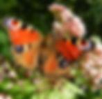 vlinders_vangen.jpg
