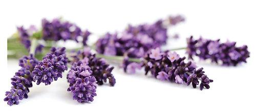 Lavender - Healing, Relaxing, Balancing
