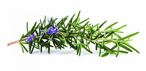 Rosemary-Mature, Dry, Clogged, Dull Skin