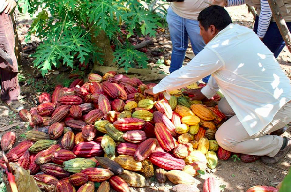 Photo taken during a cacao farm visit with the CIS program Journey to Latin America: Peru.