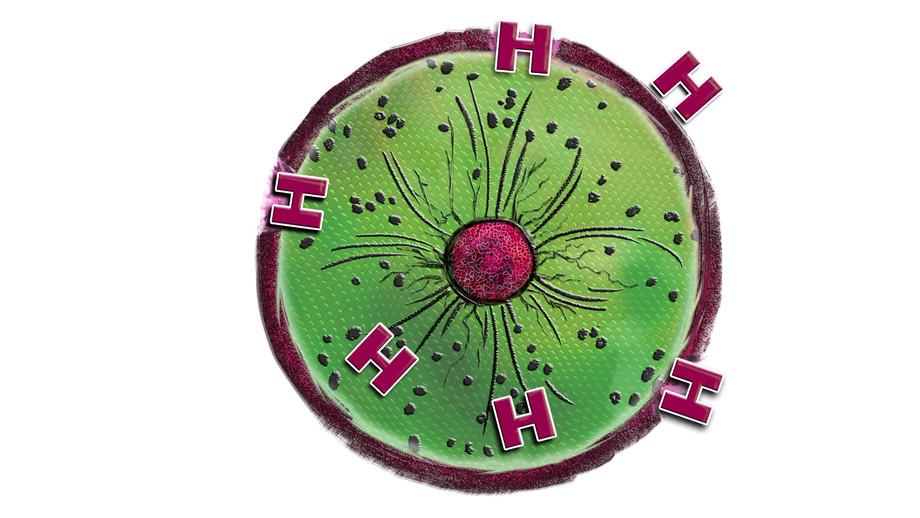 HumCircles2B.jpg