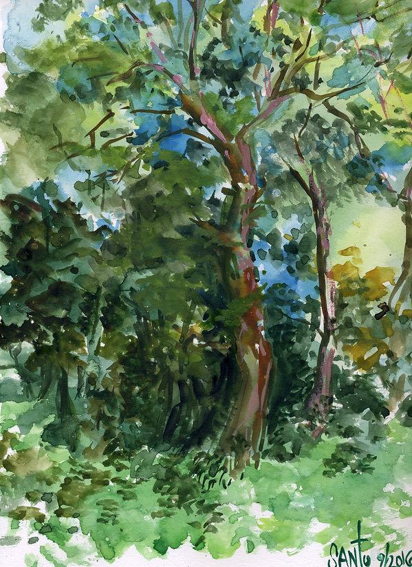 TreesWestchester.jpg