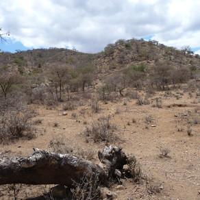 3rd (KENYA) KING'S AFRICAN RIFLES ATTACKS LATEMA-REATA NEK