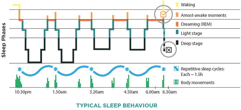 BioThrive | Sleep Cycle