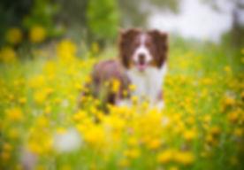 Therapiehund Mia