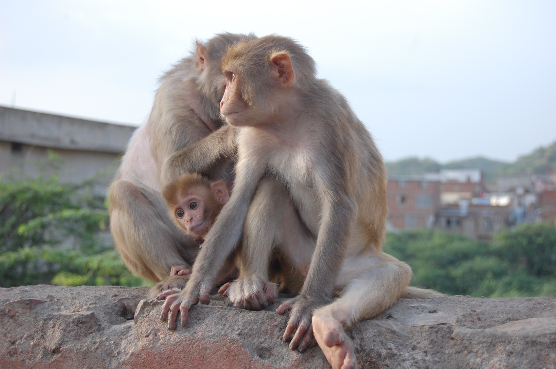 Jaipur, India - Happy Family
