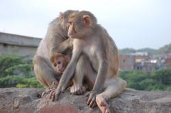 Jaipur, India - Happy Family