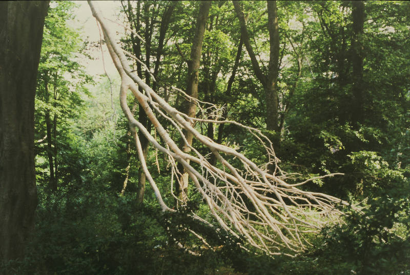 Dying Branch