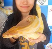 蛇は好きです
