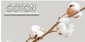 coton news.png