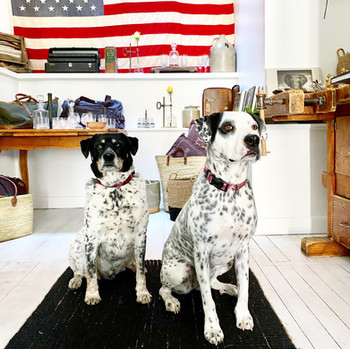 DOGS AT STORE.JPG