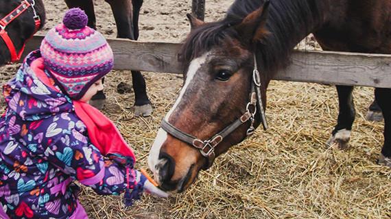 Эллина решила: она будет собирать таких животных, травмированных, выброшенных из жизни. Помогать им