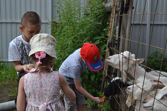 Для кормления коз детям выдается морковка