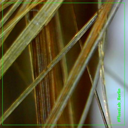 FLUSSLAB_BERLIN_microscopio4.jpg