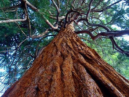 environment-landscape-leaves-399969.jpg