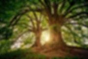 bark-branches-environment-1632790.jpg