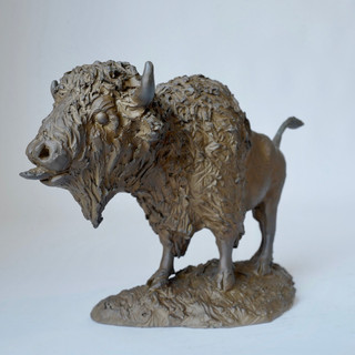 Bold Bison Bull 3 of 9