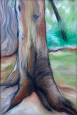 Cedar Trunk