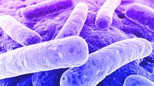 Bactérias deteriorantes na cerveja