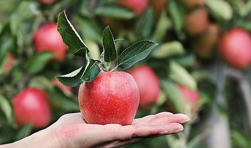 apple-2788662_1920.jpg