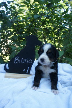 Bruno (2)
