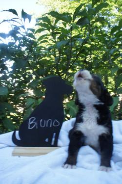 Bruno (1)