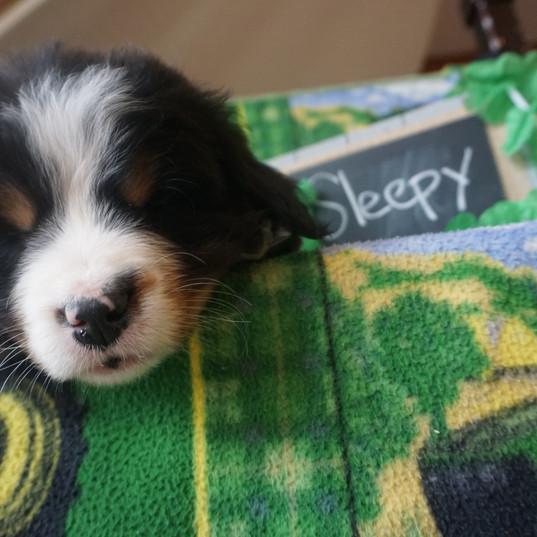 Sleepy (6).JPG