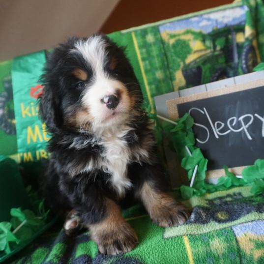 Sleepy (4).JPG