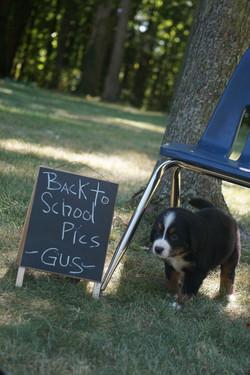 Gus (4)