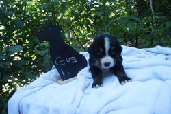 Gus (2)