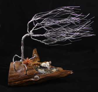 Windy Tree on Driftwood