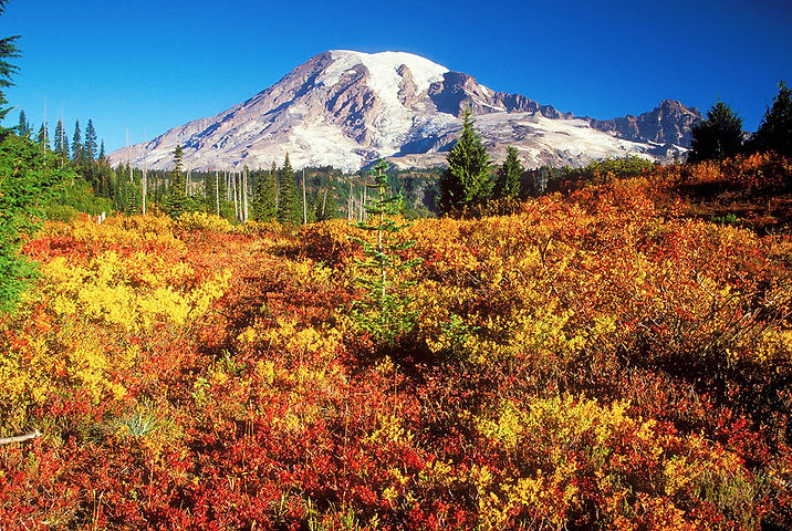 Fall-Color-at-Rainier.jpg
