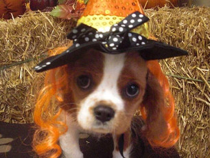 Happy Halloween from Waffles!