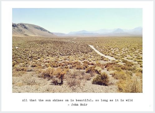 'Wild Desert' Photo Postcard 4x5.5in Pack of 5