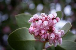 Oregon Forest Plants-13